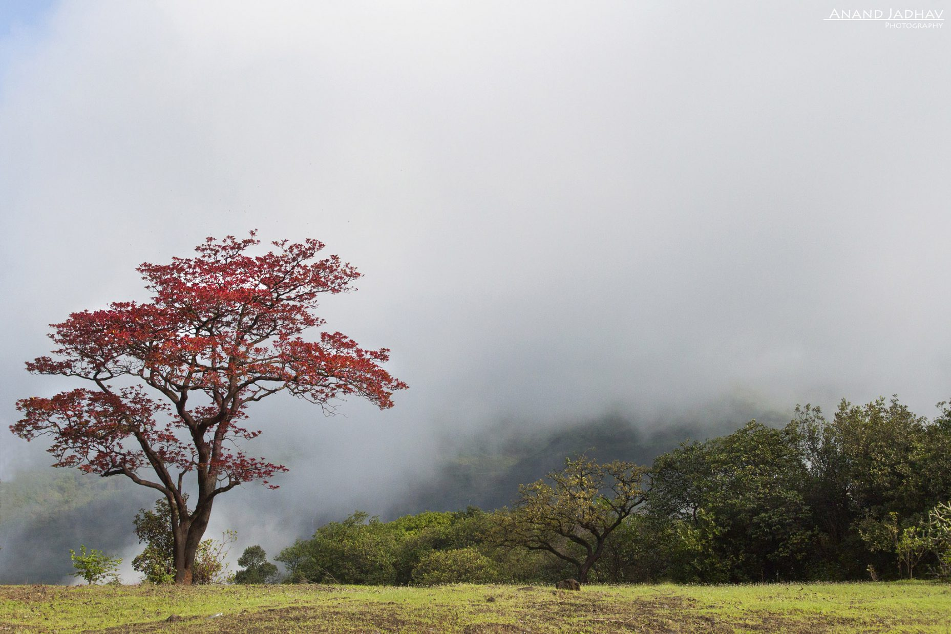 Monsoon_05_Red Tree_HD_re