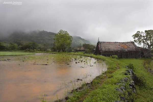 The hut along side