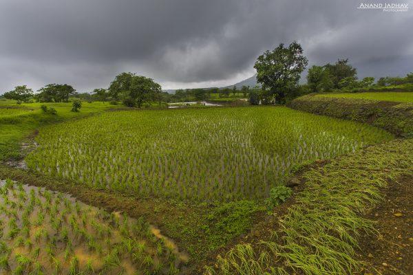 Western Ghat_51